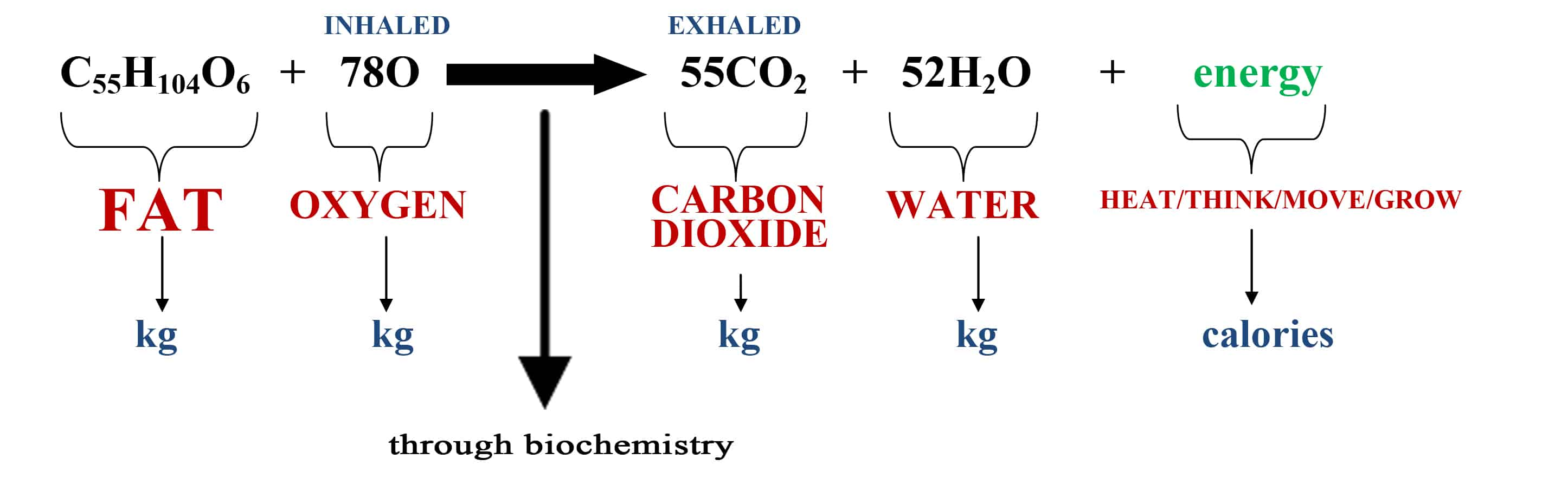 body fat chemical formula